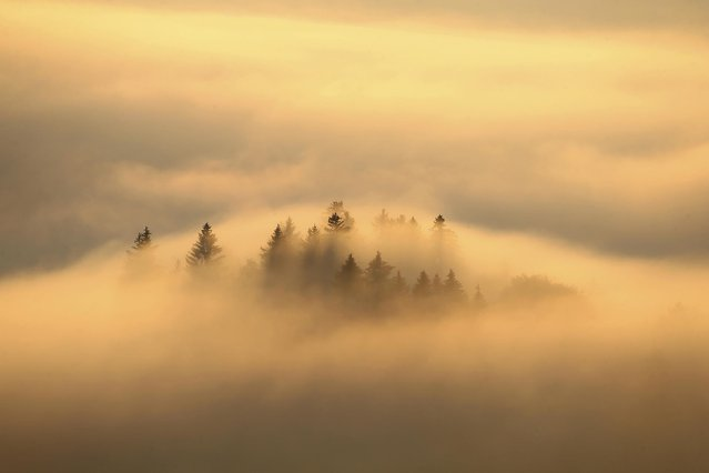 Coniferous trees rise out of the morning mist at sunrise in Bernbeuren, Bavaria on October 19, 2020. (Photo by Karl-Josef Hildenbrand/dpa)