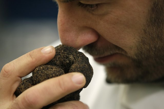 A vendor smells a winter black truffle (Tuber Melanosporum) at the Rungis international food market, south of Paris, prior to the Christmas holidays season during which truffles are part of festive meals, December 11, 2015. (Photo by Philippe Wojazer/Reuters)