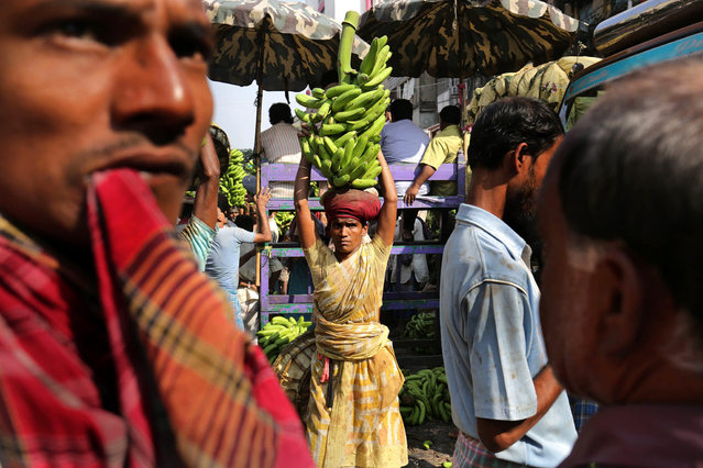 """Indian laborers handle banana branches at the largest and busiest wholesale fruit market in Calcutta, eastern India, 16 November 2016. Media reports state major wholesalers are facing troubles selling their stock of fresh fruits and vegetables as cash shortages continues to affect the market. Indian Prime Minister Narendra Modi announced the elimination of the 500 and 1,000 rupee bills (7.37 and 14.73 US dollars, respectively), hours before the measure took effect at midnight 08 November, for the purpose of fighting against """"black money"""" (hidden assets) and corruption in the country. The decision sparked some protests, while storekeepers complained about dwindling sales because many citizens lack the cash to buy the most basic products, as lines get longer at ATMs and banks. (Photo by Piyal Adhikary/EPA)"""