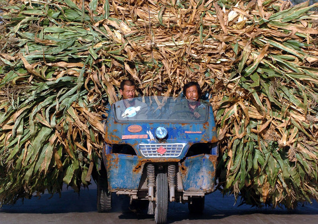 Chinese farmers transport harvested barley at a village in central Shanxi province in this picture taken September 21, 2004. (Photo by Reuters/China Photos)