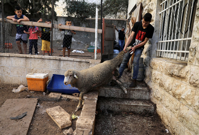A Palestinian man drags a goat, ahead of the Eid al-Adha festival in east Jerusalem August 21, 2018. (Photo by Ammar Awad/Reuters)