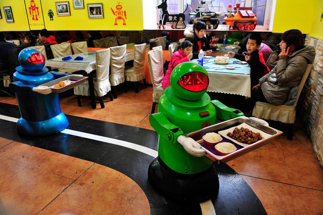 Robots deliver dishes to customers at a Robot Restaurant in Harbin, Heilongjiang province, China, on January 12, 2013. Opened in June 2012, the restaurant has gained fame in using a total of 20 robots, which range in heights of 1.3-1.6 meters (4.27-5.25 ft), to cook meals and deliver dishes. The robots can work continuously for five hours after a two-hour charge, and are able to display over 10 expressions on their faces and say basic welcoming sentences to customers. (Photo by Sheng Li/Reuters)