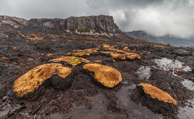 Pictures from Tasmania's central plateau, shot by wilderness photographer Dan Broun, show the extraordinary damage wrought by more than a week of bushfires following lightning strikes in Australia's southernmost state on January 13. 2016. The world heritage area was home to a range of unique alpine flora including pencil pines, king billy pines and cushion plants, some more than 1,000 years old. (Photo by Dan Broun)
