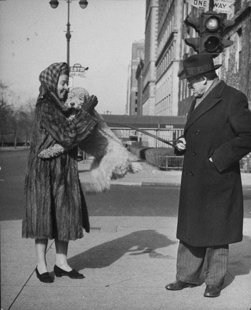 Conductor Artur Rodzinski looks on sternly as his poodle jumps into his mink coat-clad wife's arms on 57th St. and 5th Ave. (Photo by Nina Leen/Pix Inc./The LIFE Picture Collection/Getty Images)