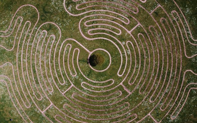 Daisies are seen at Willen lake maze in Milton Keynes, Britain, May 12, 2021. Picture taken with a drone. (Photo by Matthew Childs/Reuters)