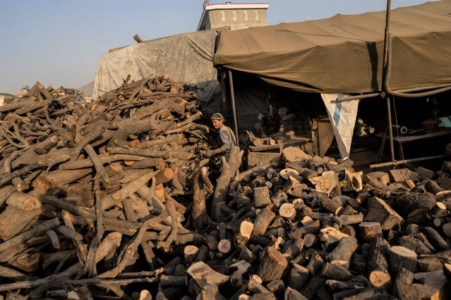 Afghan labourers cut logs to be sold as firewood in Kabul, Afghanistan, Monday, September 20, 2021. (Photo by Bernat Armangue/AP Photo)