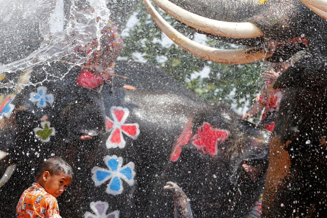A boy is splashed by elephants with water during the celebration of the Songkran water festival in Thailand's Ayutthaya province, north of Bangkok, April 11, 2016. (Photo by Jorge Silva/Reuters)