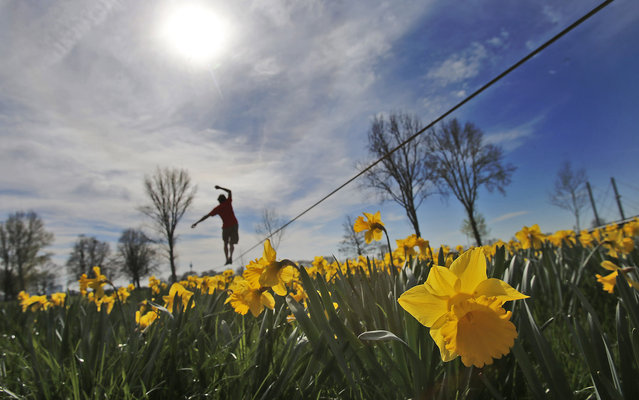 A slackline walker enjoys the sunny and warm weather in a park at the river Rhine bank in Duesseldorf, Germany, Thursday, March 20, 2014. The official start of spring came with temperatures over 20 degrees Celsius (68F) in Germany. (Photo by Frank Augstein/AP Photo)