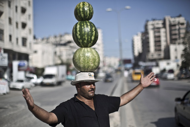 Palestinian fruit vendor Shaher Abu Yamin, 36, poses for a picture while balancing three watermelons on his head in an effort to attract customers, near the West Bank refugee camp of Kalandia, Wednesday, June 18, 2014. (Photo by Muhammed Muheisen/AP Photo)
