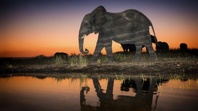 Elephant walking alongside water. (Photo by Wim van den Heever/Caters News)