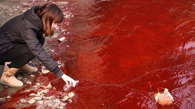 A journalist takes a sample of red polluted water in the Jianhe River in Luoyang, Henan province, on 13 December, 2011. According to local media, the sources of the pollution are two illegal chemical plants discharging their production waste water into the rain sewer pipes. (Photo by Reuters/Stringer)