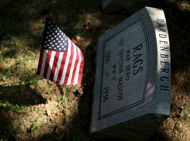 """The gravestone of """"Rags"""", a WWI mascot dog of the Army's 1st Division, is seen at the Aspin Hill Memorial Park in Aspen Hill, Maryland, August 25, 2015. """"Rags"""" crossed enemy lines in the Meuse-Argonne to deliver messages to Allied Forces. (Photo by Gary Cameron/Reuters)"""