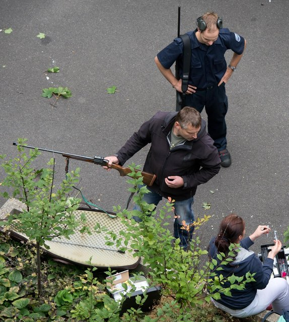 Police with tranquilizer guns prepare to capture a young moose in an administration building of Siemens in Dresden, Germany, Monday August 25, 2014. (Photo by Arno Burgi/AP Photo/DPA)