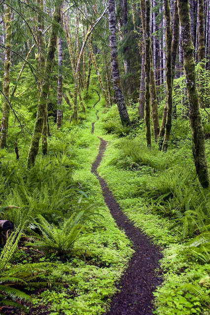 """Olympic peninsula, Washington"". An inviting path winds around the Aurora Ridge Trail in Sol Duc Valley, Olympic Wilderness, Wash. (Photo by Pablo McLoud/Smithsonian Wilderness Forever Photo Contest)"