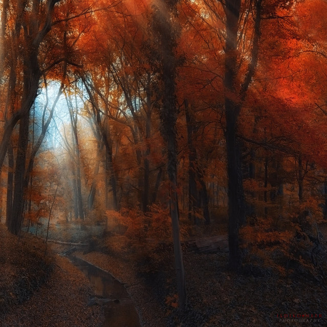 Middle-earth. (Ildiko Neer)
