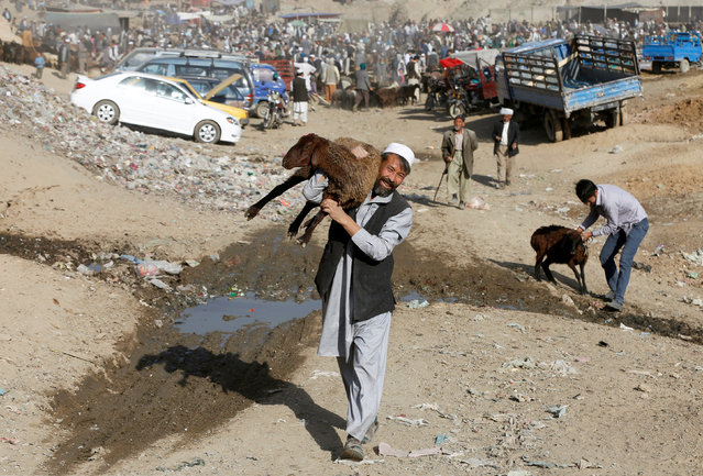 An Afghan man carries a sheep at a livestock market, ahead of the Eid al-Adha festival, in Kabul, Afghanistan September 9, 2016. (Photo by Omar Sobhani/Reuters)