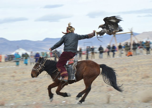 An eagle grabbed a rabbit's foot from it's master in a timed race at the Eagle Hunting Festival. (Photo by Brad Ruoho/The Star Tribune)