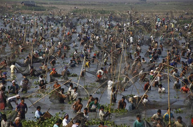 Villagers with their fishing nets participate in a community fishing event at a lake on the eve of Bhogali Bihu festival at Sonapur area in the northeastern Indian state of Assam January 14, 2015. (Photo by Reuters/Stringer)