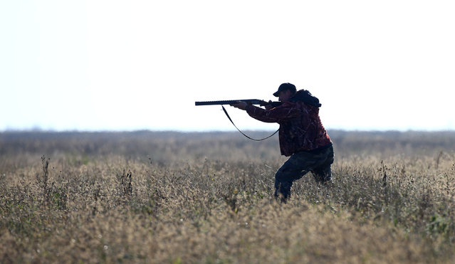 A hunter aims his gun during a hunt in a field near the village of Novosyolki, Belarus November 5, 2016. (Photo by Vasily Fedosenko/Reuters)