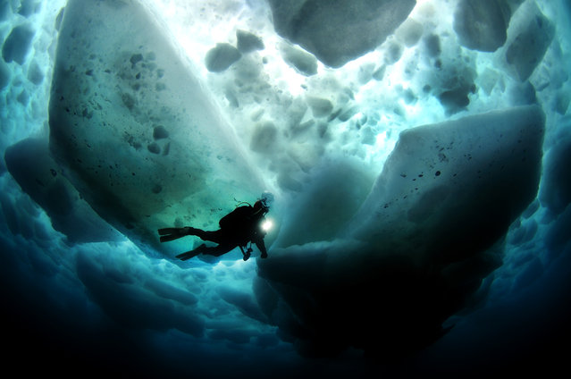 """Beneath The Ice"". A magical moment as tons of sea ice floats above while we explored the world beneath the waves. Location: Shiretoko, Japan. (Photo and caption by Aaron Wong/National Geographic Traveler Photo Contest)"