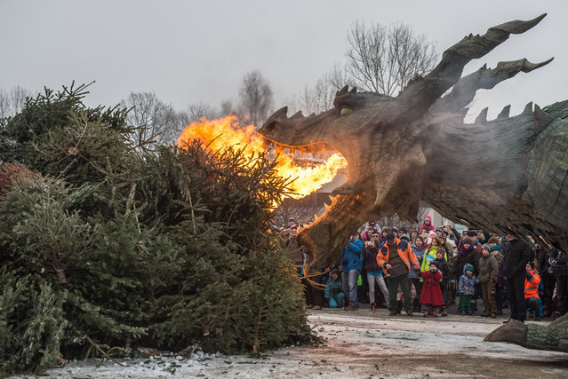 "A robotic dragon from the medieval spectacle ""The Dragon's Sting"" burns Christmas trees in Furth im Wald, Germany, on January 24, 2013. (Photo by Armin Weigel/AP Photo/DPA)"