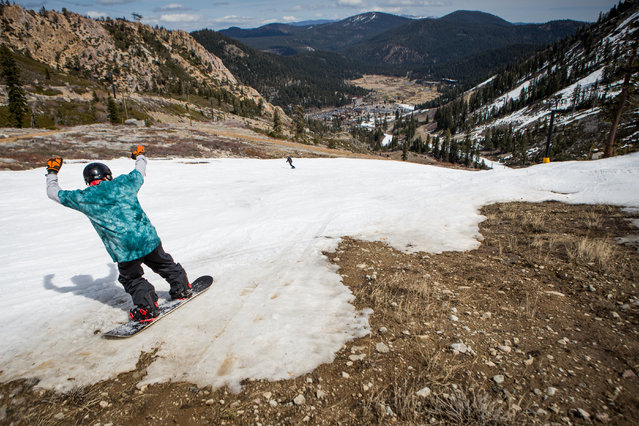 A snowboarder threads his way through patches of dirt at Squaw Valley Ski Resort, March 21, 2015 in Olympic Valley, California. Many Tahoe-area ski resorts have closed due to low snowfall as California's historic drought continues. (Photo by Max Whittaker/Getty Images)