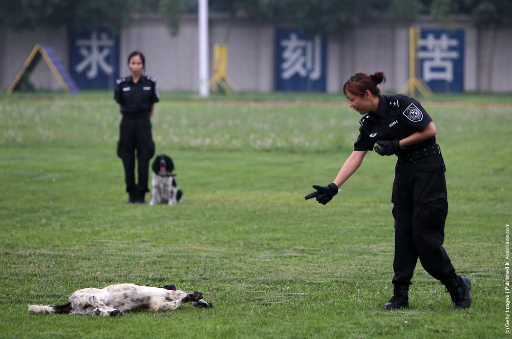 Police Dog Training Base In Beijing