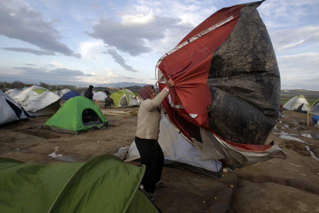 A migrant tries to restrain her tent from strong winds in a makeshift camp for refugees and migrants at the Greek-Macedonian border near the village of Idomeni, Greece, March 24, 2016. (Photo by Alexandros Avramidis/Reuters)