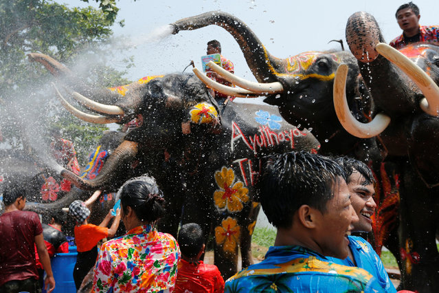 Elephants spray people with water in celebration of the Songkran water festival in Thailand's Ayutthaya province, north of Bangkok, April 11, 2016. (Photo by Jorge Silva/Reuters)