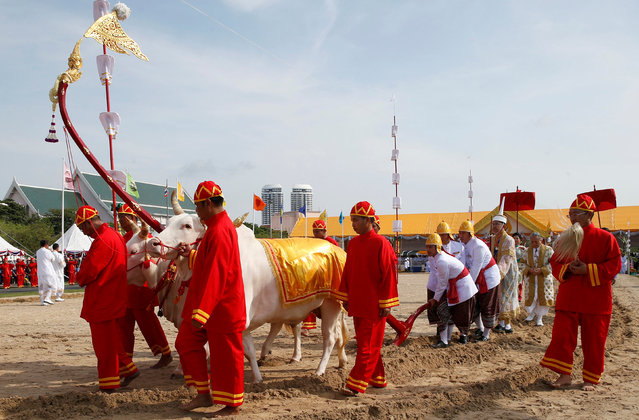 Thai officials dressed in traditional costumes walks with oxen during the aannual royal ploughing ceremony  in central Bangkok, Thailand, May 9, 2016. (Photo by Athit Perawongmetha/Reuters)