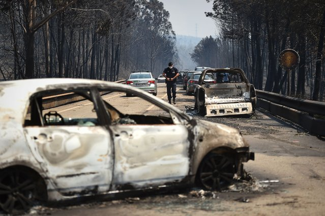 A policeman walks on a road past burnt cars after a wildfire in Figueiro dos Vinhos  on June 18, 2017. A wildfire in central Portugal killed at least 57 people and injured 59 others, most of them burning to death in their cars, the government said on June 18, 2017. Several hundred firefighters and 160 vehicles were dispatched late on June 17 to tackle the blaze, which broke out in the afternoon in the municipality of Pedrogao Grande before spreading fast across several fronts. (Photo by Patricia De Melo Moreira/AFP Photo)