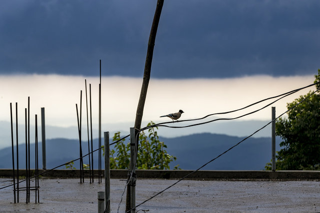 A Black-headed Jay bird sits on an electric cable as rain clouds hover over the Kangra Valley after a rainfall in Dharmsala, India, Wednesday, July 22, 2020. (Photo by Ashwini Bhatia/AP Photo)
