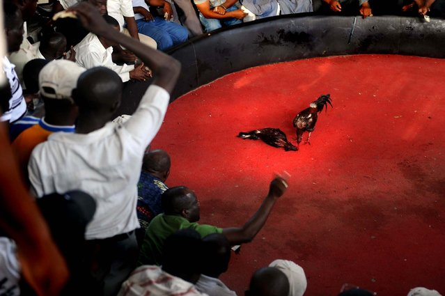 Haitians watch a cockfight in Petionville. Cockfighting is Haiti's most passionate gaming event and takes place every weekend in almost every village and neighborhood across the country. (Photo by Eitan Abramovich/AFP Photo)