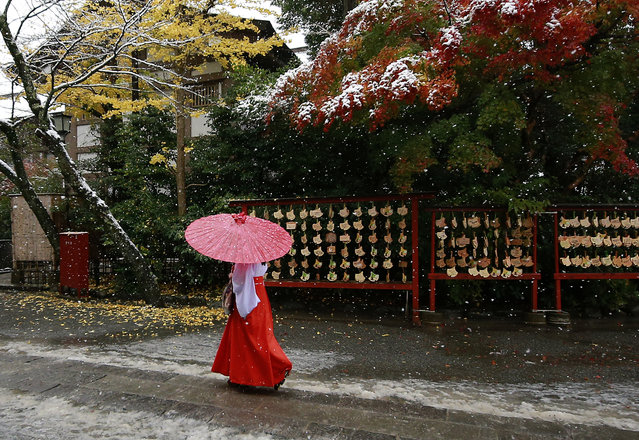 A shrine maiden walks in the snow at the Tsurugaoka Hachimangu Shrine in Kamakura, near Tokyo, Thursday, November 24, 2016. (Photo by Shizuo Kambayashi/AP Photo)