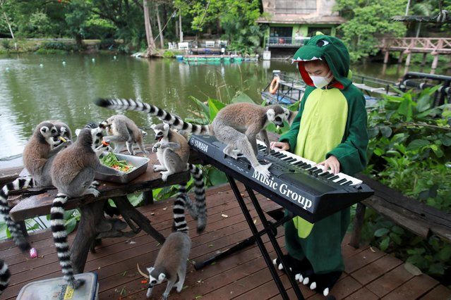 Lemurs are seen as Seenlada Supat, 11, plays keyboard for animals amid the coronavirus disease (COVID-19) outbreak, at a zoo in Chonburi, Thailand on May 26, 2021. (Photo by Soe Zeya Tun/Reuters)