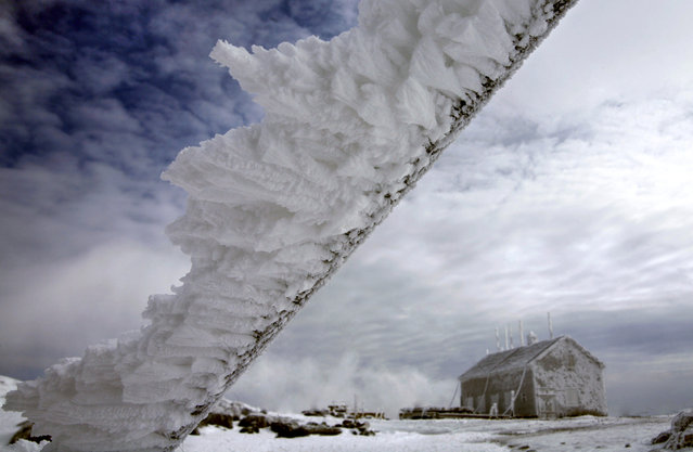 In this Tuesday, March 10, 2015 photo, rime ice extends horizontally from a metal pole at the summit of 6,288-foot Mt. Washington, in New Hampshire. (Photo by Robert F. Bukaty/AP Photo)