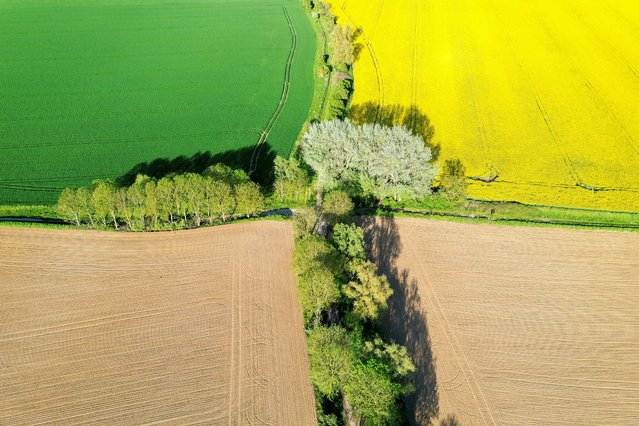 An aerial view shows a yellow rapeseed, wheat and sugar beet fields in Carnieres, France, May 18, 2021. Picture taken with a drone. (Photo by Pascal Rossignol/Reuters)