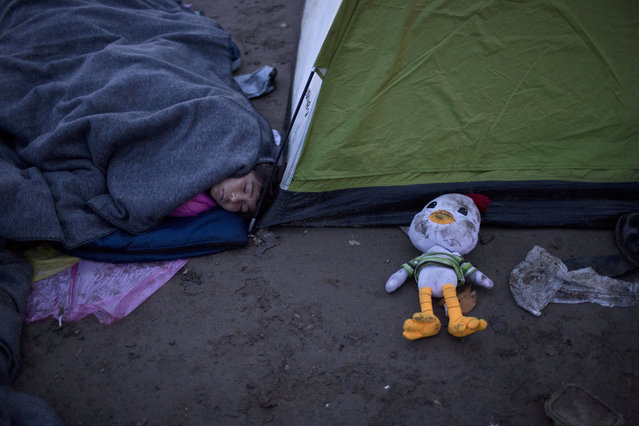 A girl sleeps on a field next to a tent as she and her family wait to be allowed to cross the Greek-Macedonian border near the northern Greek village of Idomeni,  Saturday, February 27, 2016. Greek officials said not a single migrant has been allowed into northern neighbor Macedonia Friday, with nearly 5,000 people waiting at or near a border crossing to be admitted. More than 20,000 migrants are stuck in Greece. (Photo by Petros Giannakouris)/AP Photo