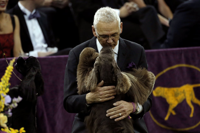 A handler gets a kiss from a spaniel during judging in the Sporting Group judging at the 141st Westminster Kennel Club Dog Show at Madison Square Garden in New York City, U.S., February 14, 2017. (Photo by Mike Segar/Reuters)
