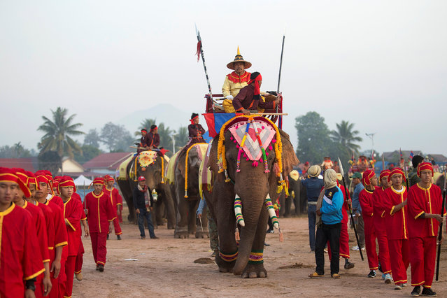 Elephants take part in a parade during Elephant Festival, which organisers say aims to raise awareness about the animals, in Sayaboury province, Laos February 18, 2017. (Photo by Phoonsab Thevongsa/Reuters)