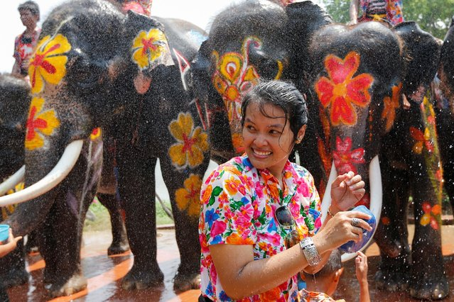 A woman is splashed by elephants with water during the celebration of the Songkran water festival in Thailand's Ayutthaya province, north of Bangkok, April 11, 2016. (Photo by Jorge Silva/Reuters)