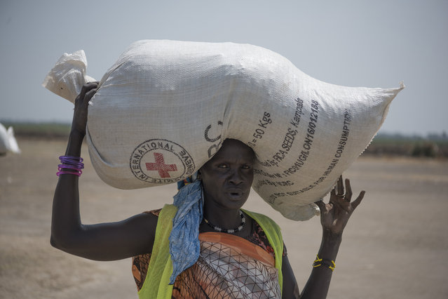 In this photo taken Tuesday, April 11, 2017, A woman walk back to her home after receiving food distributed by ICRC at a site in Leer County region of South Sudan. Two months after a famine was declared in two counties amid its civil war, hunger has become more widespread than expected, aid workers say, region on the brink of starvation and people at risk of dying without sustained food assistance. (Photo by AP Photo/Stringer)