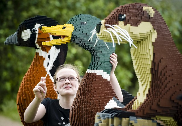 Evie Gilder, 10, tickles a huge LEGO sculpture of a mallard with a bird's feather at Wildfowl and Wetlands Trust Slimbridge, England, Tuesday, July 14, 2015, where 10 individually designed LEGO brick animals are on display over the summer. (Photo by Ben Birchall/PA Wire via AP Photo)