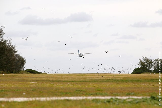 Birds fly away from the landing strip as a plane approaches for landing at Lady Elliot Island, Australia