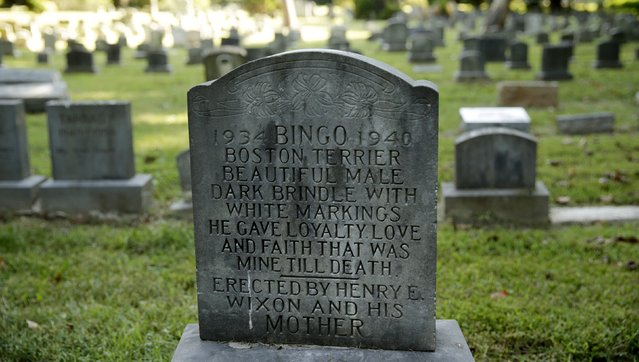 """The gravestone of """"Bingo"""" is seen at the Aspin Hill Memorial Park in Aspen Hill, Maryland August 25, 2015. (Photo by Gary Cameron/Reuters)"""