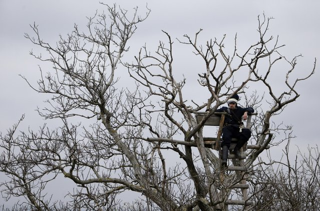 A historical re-enactment enthusiast dressed as a soldier rests in a tree near the southern Moravian village of Herspice November 28, 2014. (Photo by David W. Cerny/Reuters)