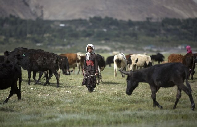 In this August 18, 2016 photo, a teenage girl takes care of her animals in Qala-e Panja village, Wakhan district of Badakhshan province, far northeastern Afghanistan. The Wakhan corridor, which has been named Afghanistan's second national park, is the country's most – perhaps only – peaceful region. But it is so poor, even for Afghanistan, that people borrow food and children go barefoot during the long, harsh winters. (Photo by Massoud Hossaini/AP Photos)