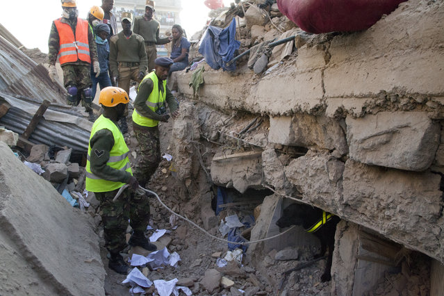Rescue workers use a sniffer dog to look for survivors at the site of the collapsed building in the capital Nairobi, Kenya , Monday, January 5, 2015. (Photo by Sayyid Azim/AP Photo)
