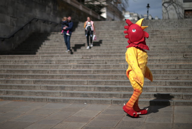 A person dressed in a chicken costume walks through Westminster on Good Friday in London, Britain on April 2, 2021. (Photo by Hannah McKay/Reuters)