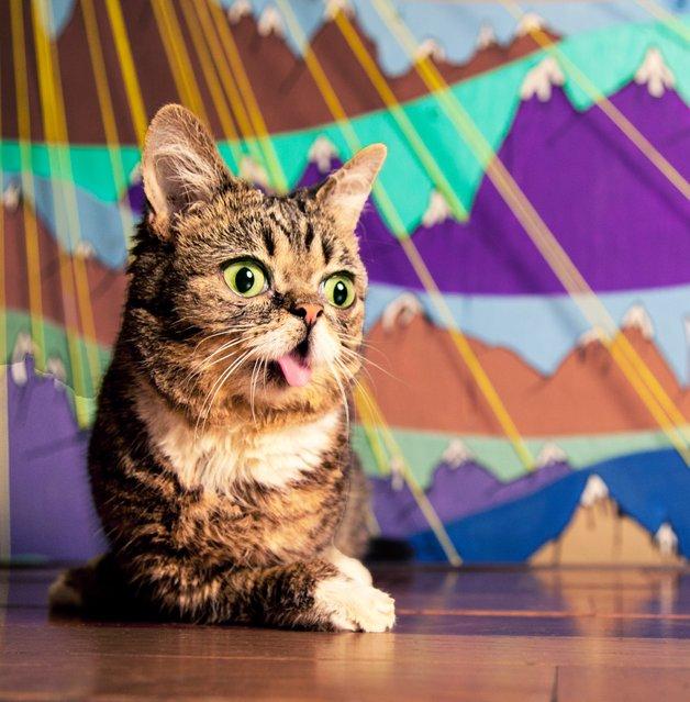 Meet Lil Bub